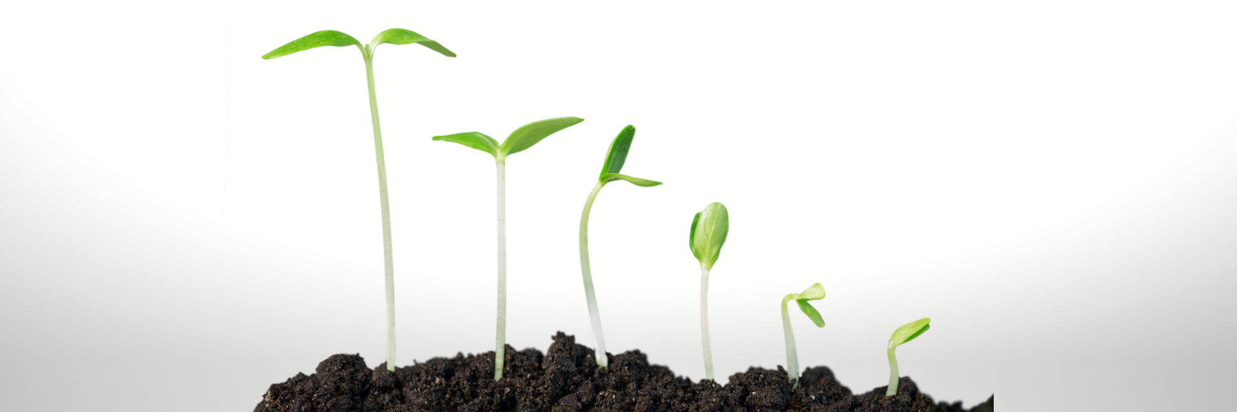 a seedling growing through 6 stages out of soil from right to left as a symbol of growing your people with online training